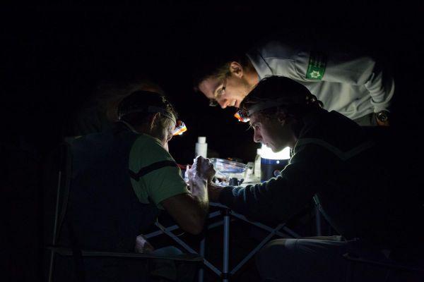 Un recensement de chauves-souris a lieu la nuit dans la forêt de Tronçais, dans l'Allier.