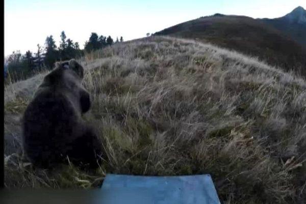 Une ourse relâchée en Béarn; le 5 octobre 2018.