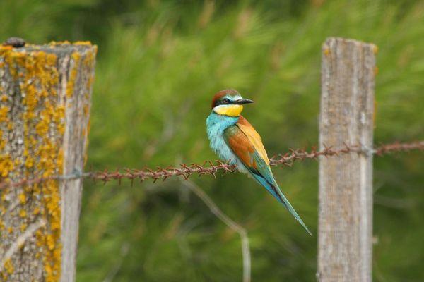 Les oiseaux vivent aussi sous la menace de leur habitat et des pollutions.