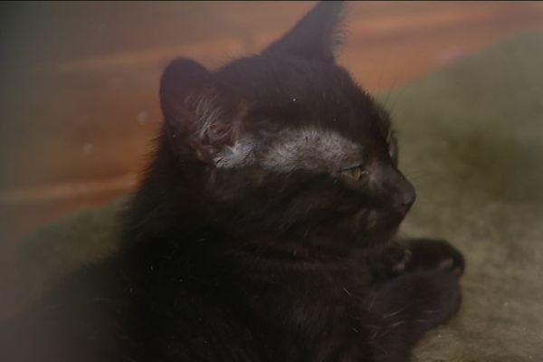 Ce petit chat vient d'arriver à la SPA de Besançon.