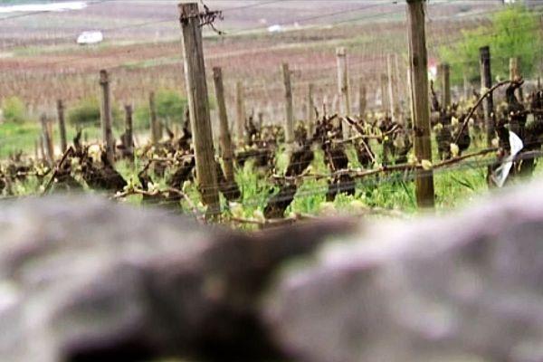 La vigne près de Gevrey-Chambertin (archives)