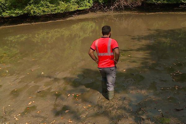Des agents de la ville, de l'agglomération, des bénévoles et des pêcheurs se sont mobilisés pour tenter de sauver les quelques poissons encore en vie. Opération rendue difficile par la vase.