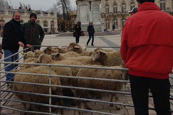 Nancy : manifestations des éleveurs contre le loup.