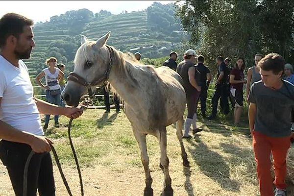 Les chevaux ont été évacués ce vendredi de Saint Roman de Bellet pour être mis à l'abri.