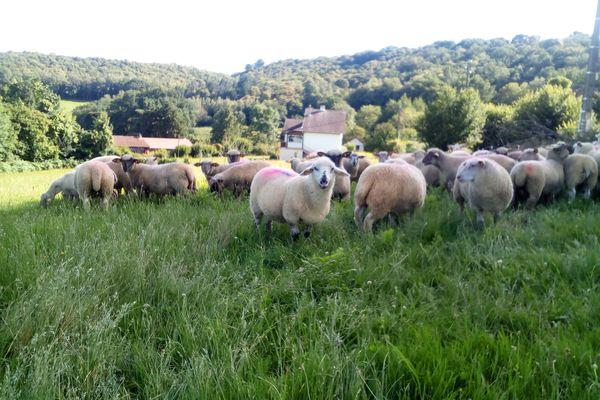 L'élevage de brebis d'Emilie Pons à Eymoutiers