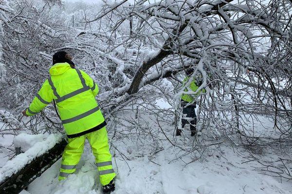 Des techniciens d'Enedis dégagent un arbre, tombé sur la chaussée et sur une ligne électrique, entre Guebwiller et Buhl, le 15 janvier 2021.