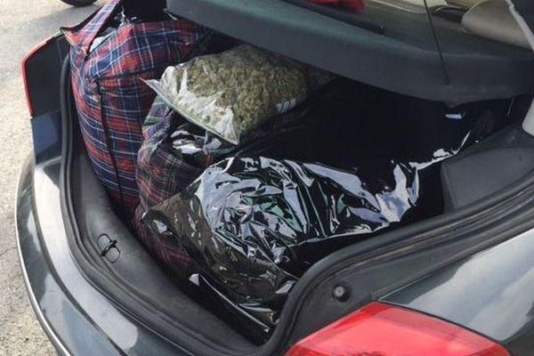 Le cliché pris par les douaniers montre un coffre était rempli de cannabis