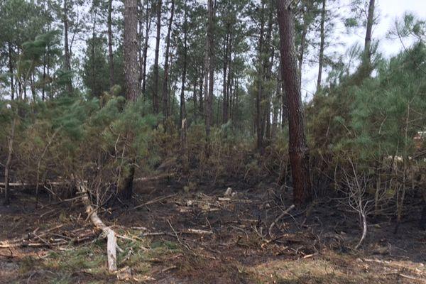 F3A - forêt incendiée Lubbon Landes - 13/02/2017