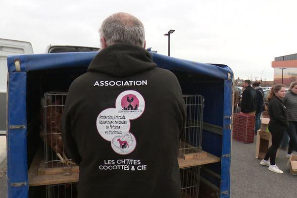 Les membres de l'association soutiennent avoir sauvé près de 13 000 poules depuis leur début il y a deux ans.