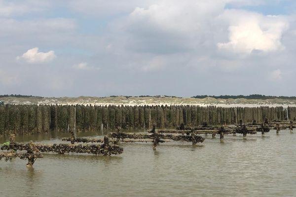 D'ici cet été, Les bouchots devront être libérés pour pouvoir installer les nouvelles moules.