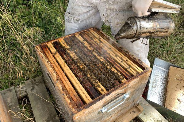 Les cadres avant la récupération du miel