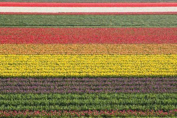 Les belles couleurs des tulipes du Keukenhof.