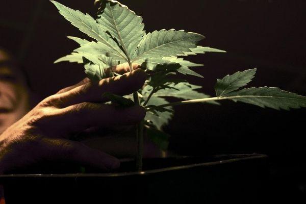 Dominique Broc et ses plantes à Tours