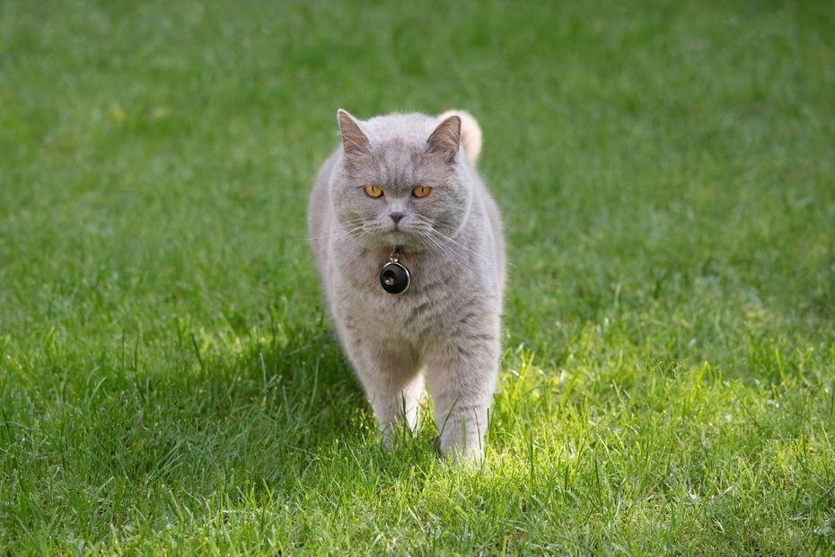 Feelloo, la start-up bretonne fait la promotion de son GPS pour chat au CES de Las Vegas