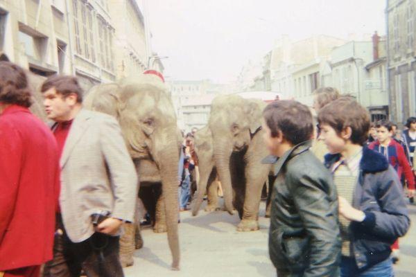 Parade des éléphants du cirque Pinder-Jean Richard dans les rues de Niort en 1980