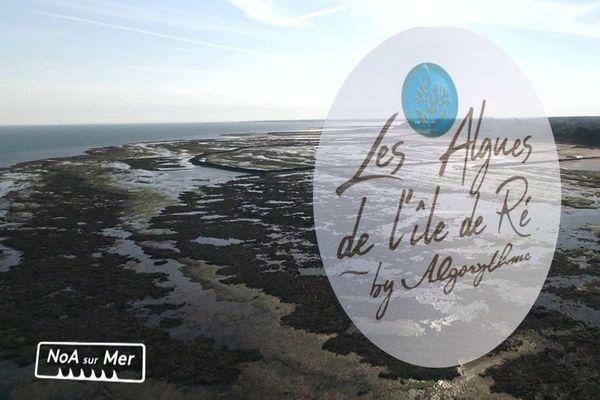 NoA sur Mer et les algues sur l'île de Ré