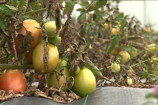 De nombreux légumes bio sont cultivés aux portes de Besançon.