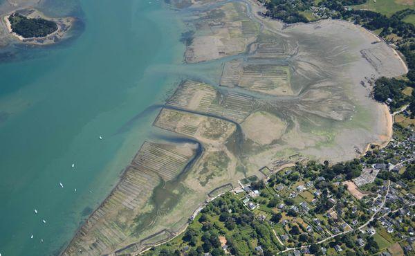 Les algues vertes sont aussi présentes dans le golfe du Morbihan, ici aux abords de l'Ile-aux-Moines