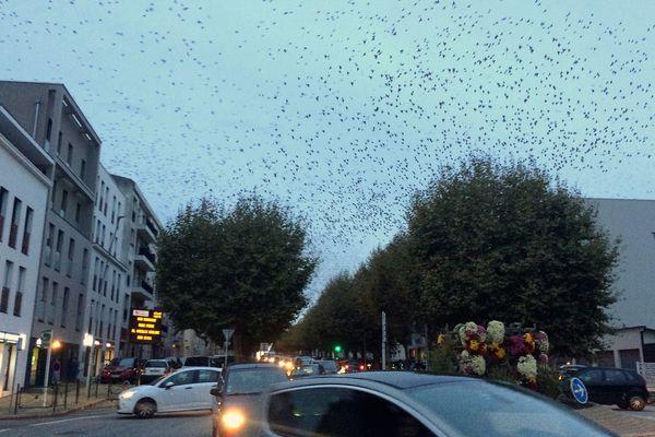 Effarouchement d'oiseaux à la Roche-sur-Yon