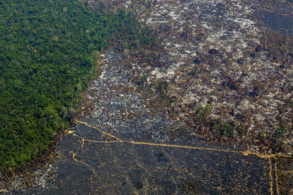 Vue aérienne de la déforestation dans une réserve de l'Etat du Pará, août 2019.