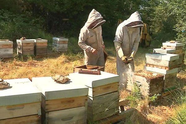 Cévennes - des ruches - 2019.