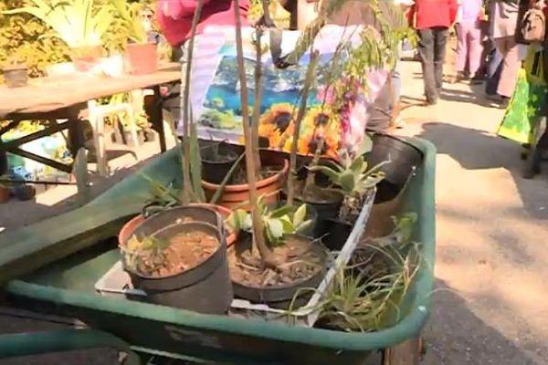 A la bourse aux plantes de Nice on troque des plantes, des graines, et des conseils !