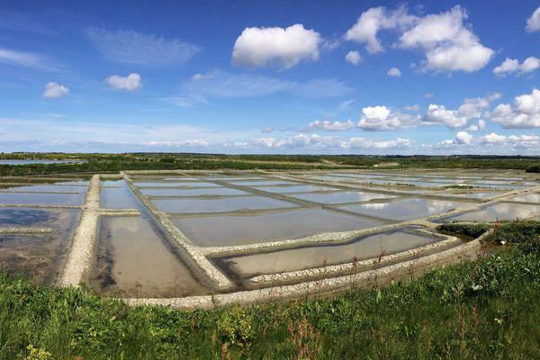 Des marais salants à Batz-sur-Mer (Loire-Atlantique)