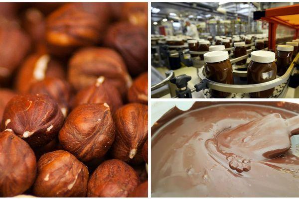 Les noisettes du Nutella fabriqué en Normandie sont-elles récoltées par des enfants réfugiés en Turquie ?