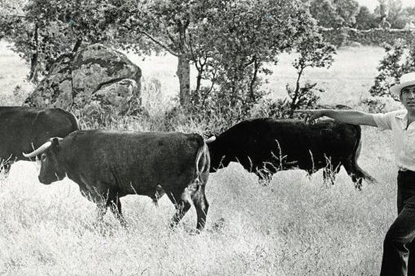 """Une allure de paysan, mais le regard planté droit dans l'objectif du photographe : Victorino Martín était un éleveur ce catégorie et un """"communicant"""" exceptionnel."""