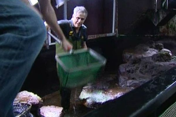 Les soigneurs vident les aquariums pour les nettoyer