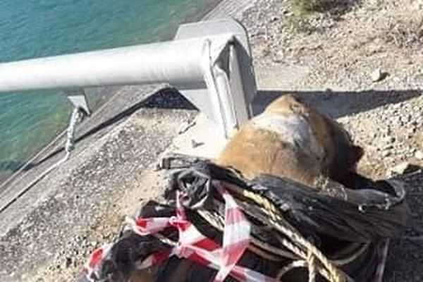 Le chien a été retrouvé dimanche matin 6 septembre, dans le canal de l'EDF, entre Lançon-de-Provence et Pélissane.