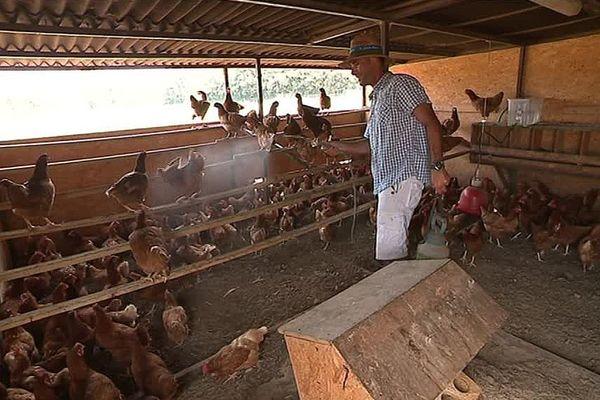 A Toulouges, Olivier Parra utilise uniquement du vinaigre blanc et de la terre de diatomée pour traiter ses poules.