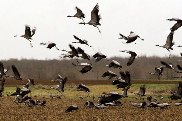 Est-ce aux chasseurs de compter les migrateurs ?