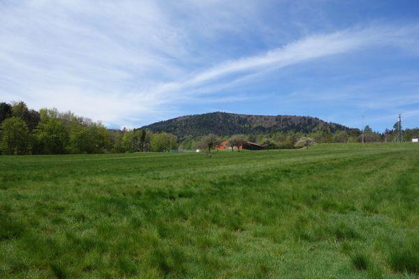 La prairie du Langacker à Wangenbourg-Engenthal
