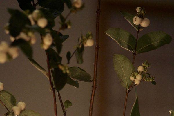 L'ikebana est l'art floral du Japon.