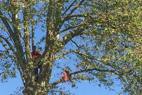 Thomas Brail se présente comme un arboriste grimpeur.