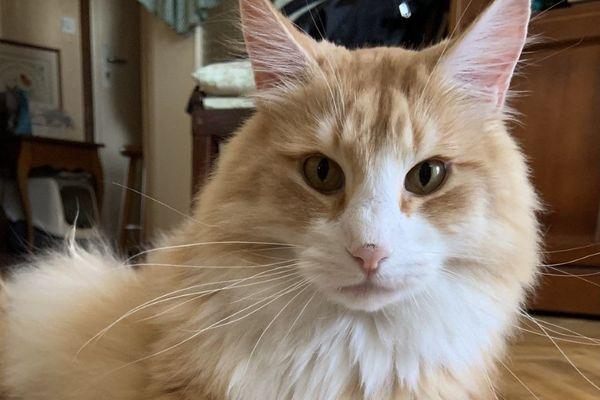 En France, on compte 14 millions de chats domestiques souvent considérés comme des membres de la famille à part entière
