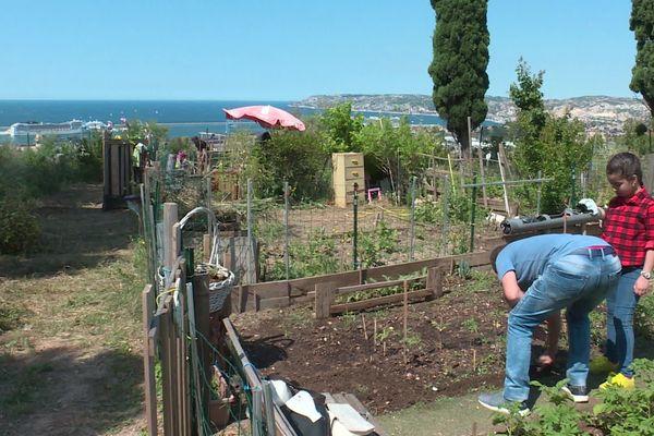 Dans le 15ème arrondissement de Marseille, plusieurs jardins partagés comme celui-ci ont été saccagés
