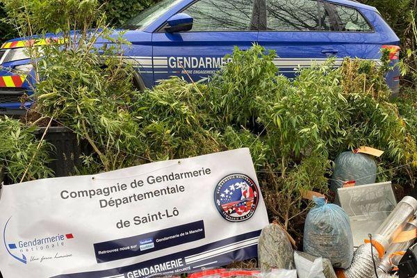 Les compagnies d'Avranches et de Pontorson ont interpelé à quelques jours d'intervalle deux cultivateurs de cannabis dans la Manche
