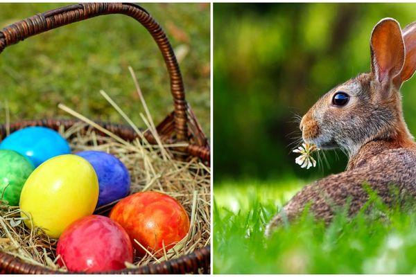 ILLUSTRATION. Qui amène les oeufs en chocolat ? Les cloches ou les lapins ?