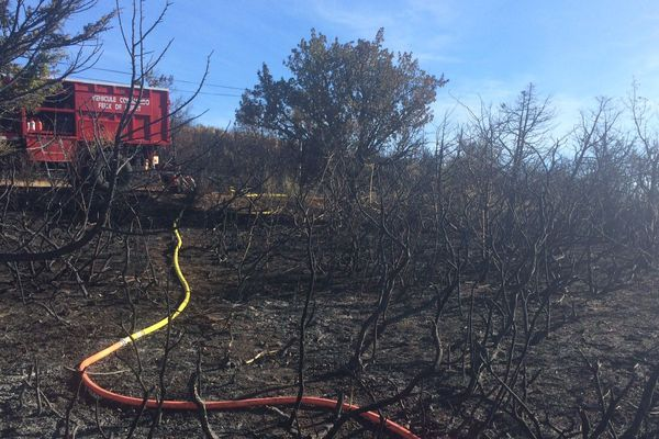 Attisé par un vent fort, 30 hectares de pinède et de chênes verts ont brûlésur la commune de Joncels (nord-ouest de l'Hérault).