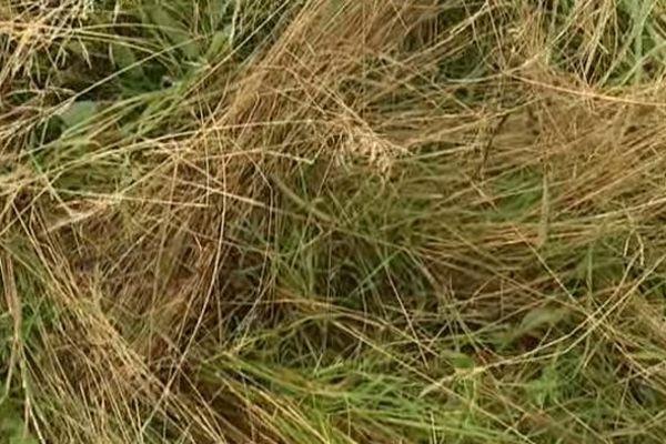 Il faut au moins quatre jours consécutifs de soleil avant de pouvoir couper les foins. Impossible en Auvergne cet été. Certains agriculteurs ont déjà un mois et demi de retard. Et n'ont pas encore pu stocker de fourrage sec.