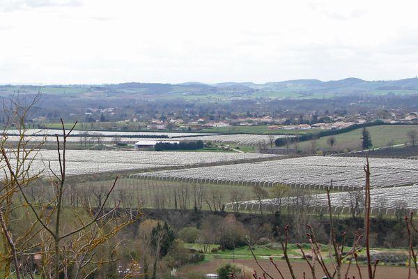 Les vergers dans la région de Lavaur.