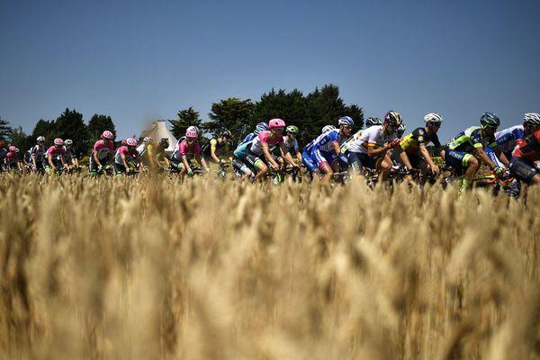 Le peloton passe devant un champ de blé au cours de la 6e étape de la 105e édition du Tour de France, entre Brest et Mur-de-Bretagne Guerledan, le 12 juillet 2018.
