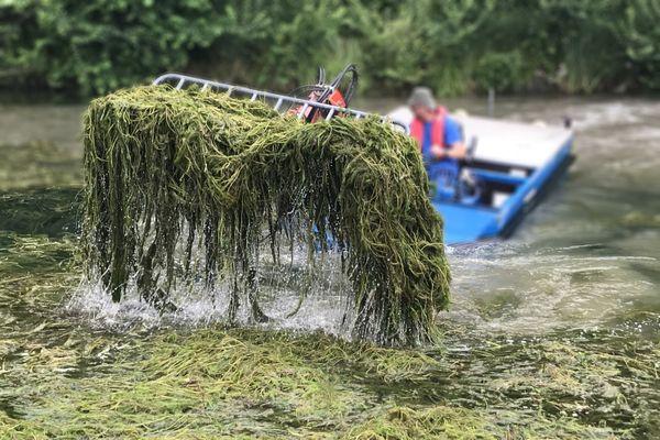 Tronville-en-Barrois le 28 juillet 2021 : le ramassage du myriophylle hétérophylle se fait à l'aide d'une petite barge équipée d'un bras élévateur. Auparavant la plante aquatique a été coupée à l'aide d'une lame tirée par le bateau sur le bief concerné.