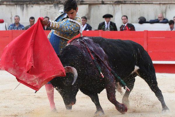 """La SPA a lancé une guerre judiciaire contre la corrida en déposant plainte à Paris pour """"sévices graves et actes de cruauté"""" envers les taureaux."""