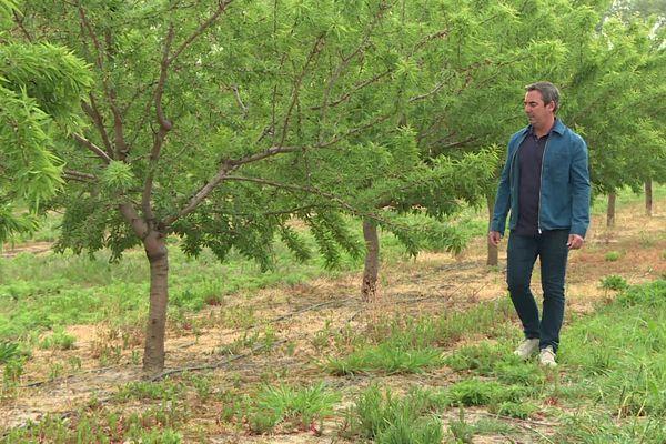 Pierre Lillamant, confiseur, avait planté 9 hectares d'amandiers pour produire ses calissons.