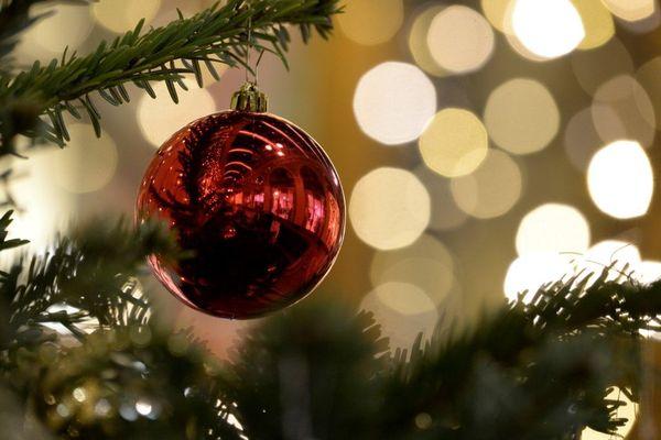 Une entreprise propose de replanter les sapins de particuliers après les fêtes de Noël. (Illustration)