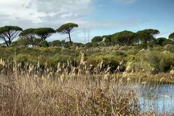 La mare de Catchéou dans le Var est un haut lieu de biodiversité avec un grand nombre d'espèces menacées.