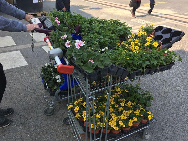 En fonction de la météo, les magasins de fleurs et les jardineries sont pris d'assaut en ce moment, les achats sont importants.